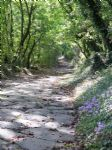 Walking holidays in Via Francigena - Stages - Siena to Montefiascone - Click Here For Full Details